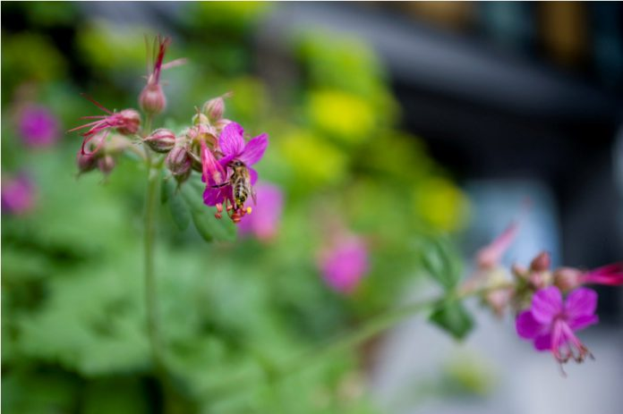 Scotland seeks centre of expertise for plant health