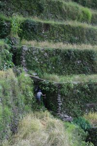Local farmer clearing the kinnaw channel running between two sets of terraces. © Charles Lamb