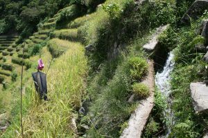 Kinnaw running down through the terraces, observed by a Filipino scarecrow. © Charles Lamb