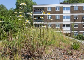 LIFE + green roofs
