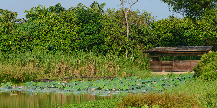 Environmental Improvement Project at Kranji Marshes - Stephen Caffyn Landscape Design