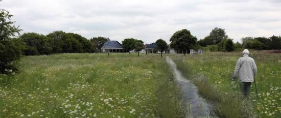 Helen Goodwin's wild flower meadow