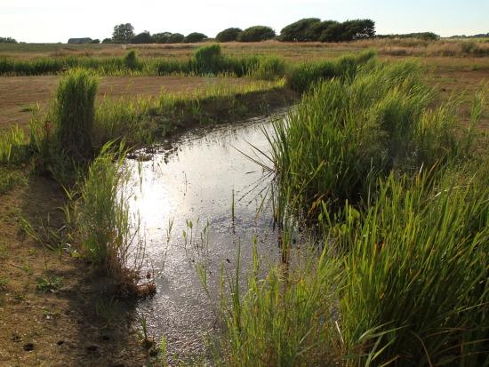Water case studies published on LI website