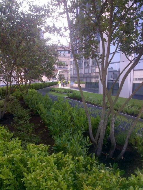 David Blackwood Murray's designs for the sky garden at 99 Bishopsgate. Copyright: David Blackwood Murray