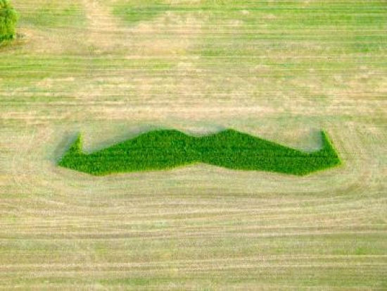 The giant green moustache