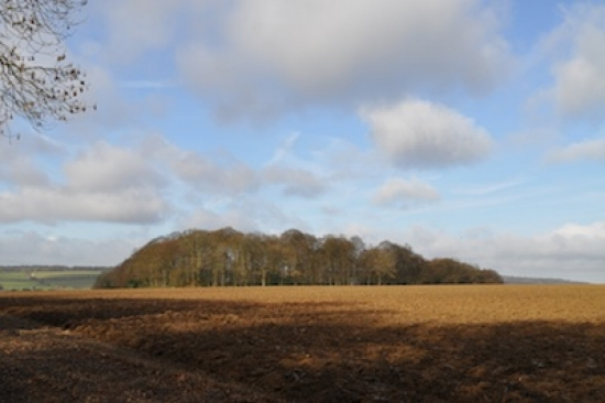 Jones Hill Wood in Buckinghamshire is one of 21 ancient woodlands through which HS2 will run Ⓒ The Woodland Trust