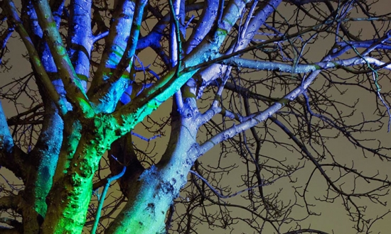 A tree in Fordham Park is lit up in green and blue