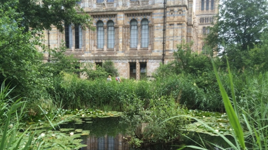 Petition to save Natural History Museum wildlife garden