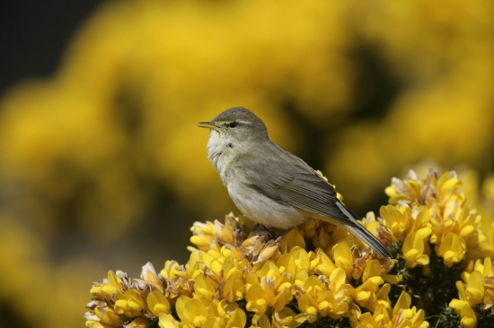 RSPB launches Defend Nature campaign