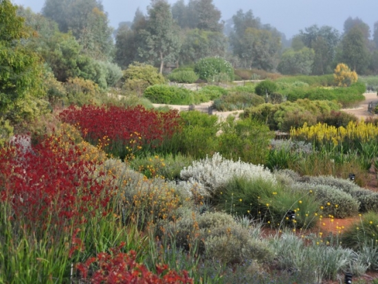 The Australian Garden won the top prize for landscape at the World Architecture Festival