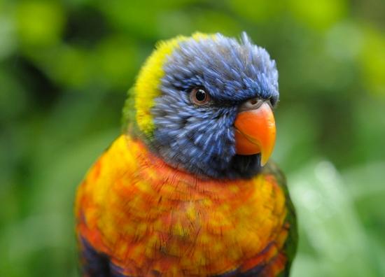 Bird from Bristol Zoo