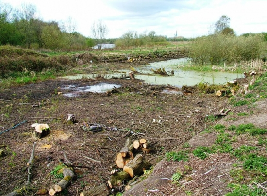 The 'before' shot as work will soon begin to turn this land into an ecology park